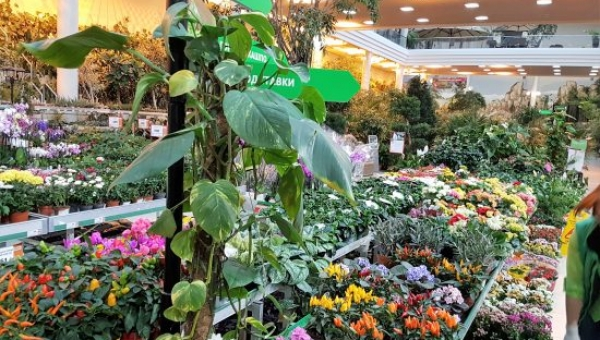 Approaching garden retail with fresh ideas