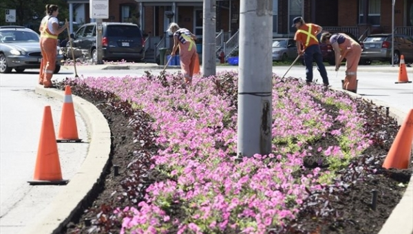 Hamilton's roadside gardens will bloom this year despite the pandemic pause